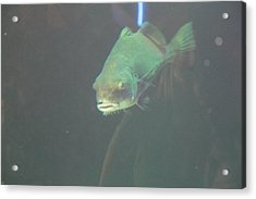 Fish - National Aquarium In Baltimore Md - 121292 Acrylic Print by DC Photographer