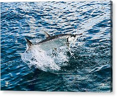Fish Out Of Water Acrylic Print by  Michael Glenn