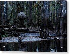 Fisheating Creek 26 Acrylic Print by Carol Kay