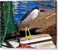 Fisherman Acrylic Print by Robert Brown