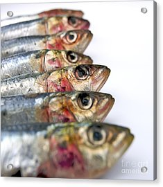 Fishes Acrylic Print by Bernard Jaubert