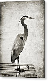 Fishing From The Dock Acrylic Print by Scott Pellegrin
