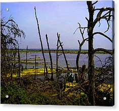 Fishing The Bottomlands Acrylic Print by Timothy Bulone