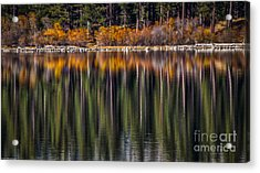 Flames Of Autumn Acrylic Print by Mitch Shindelbower