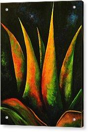 Flaming Aloe Acrylic Print by Migdalia Bahamundi