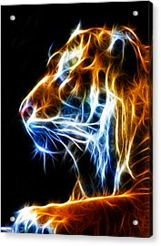 Flaming Tiger Acrylic Print by Shane Bechler