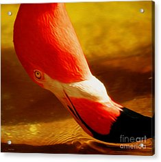 Flamingo Beauty Acrylic Print by Cheryl Young
