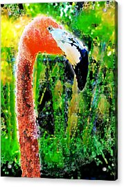 Flamingo Acrylic Print by David Blank