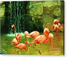Flamingo Acrylic Print by Esther Rowden