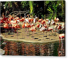 Flamingo Family Reunion Acrylic Print by Karen Wiles