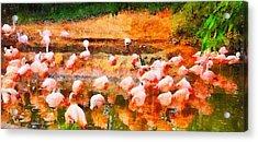 Flamingo Gathering Acrylic Print by Dan Sproul