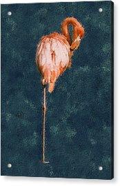 Flamingo - Happened At The Zoo Acrylic Print by Jack Zulli
