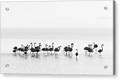 Flamingos Acrylic Print by Joan Gil Raga