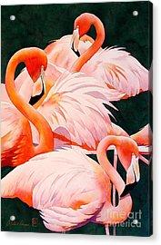 Flamingos Acrylic Print by Robert Hooper