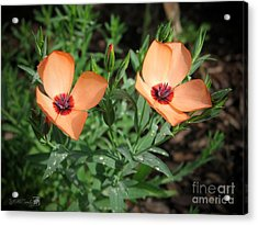 Flax Named Charmer Salmon Acrylic Print by J McCombie