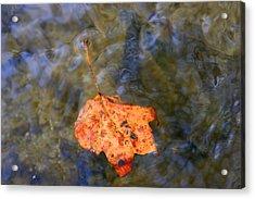Floating Leaf Acrylic Print by Paula Tohline Calhoun