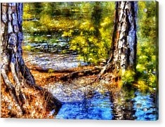 Flooded Roots Acrylic Print by Daniel Eskridge