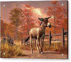 Flop Eared Donkey Acrylic Print by Daniel Eskridge