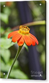 Floral 3 - 05_26_2013 Acrylic Print by Eyzen Medina