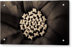 Floral Close-up II Acrylic Print by Marco Oliveira