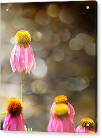 Floral Dance Acrylic Print by Margaret Hormann Bfa