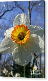 Floral Dew  Acrylic Print by Neal  Eslinger