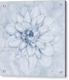 Floral Layers Cyanotype Acrylic Print by John Edwards