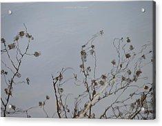 Floral Reflection Acrylic Print by Sonali Gangane