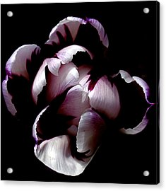 Floral Symmetry Acrylic Print by Rona Black