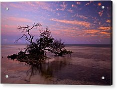 Florida Mangrove Sunset Acrylic Print by Mike  Dawson