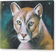 Florida Panther Acrylic Print by Melinda Saminski
