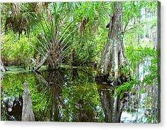 Florida Wetland Acrylic Print by Carey Chen