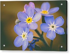 Forget Me Nots Acrylic Print by Marco Oliveira