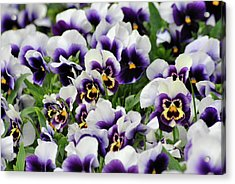Flower Faces Acrylic Print by Frederico Borges