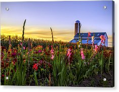 Flower Farm Acrylic Print by Mark Papke