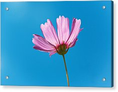 Flower - Growing Up In Philadelphia Acrylic Print by Mike Savad