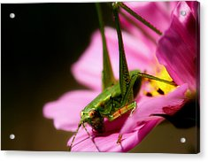 Flower Hopper Acrylic Print by Michael Eingle