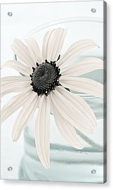Flower In A Vase Still Life Acrylic Print by Frank Tschakert