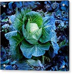 Flower Acrylic Print by Julian Cook