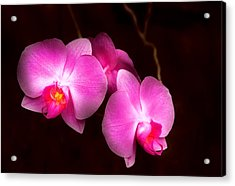 Flower - Orchid - Better In A Set Acrylic Print by Mike Savad