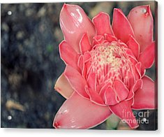 Flower Acrylic Print by Shawna Gibson