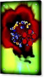 Flower With'in Acrylic Print by Kathy Sampson