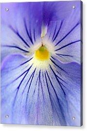 Flower Yolk Acrylic Print by Mike Podhorzer