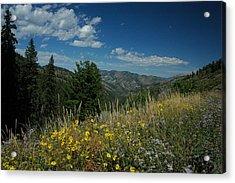 Flowering Yellowstone Acrylic Print by Larry Moloney