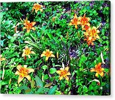 Flowers 2 Acrylic Print by Dietrich ralph  Katz