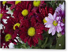Flowers Acrylic Print by Ahmed Tarek Shaffik