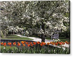 Flowers And Bench At Michigan State University  Acrylic Print by John McGraw