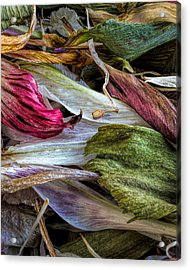 Flowers Acrylic Print by Bob Orsillo