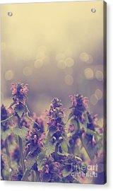 Flowers Acrylic Print by Jelena Jovanovic