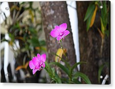 Flowers - Panviman Chiang Mai Spa And Resort - Chiang Mai Thailand - 01131 Acrylic Print by DC Photographer